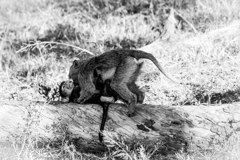 Jeux de singes