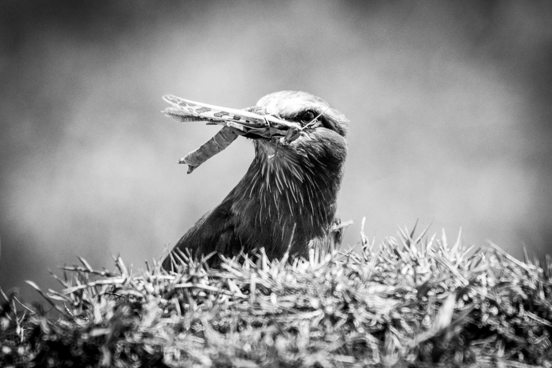 La chasse de l'oiseau 2