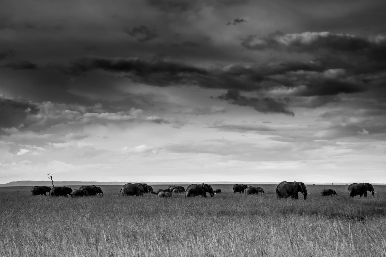 Le ciel et les éléphants